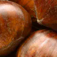Chestnuts For Agribusiness Page